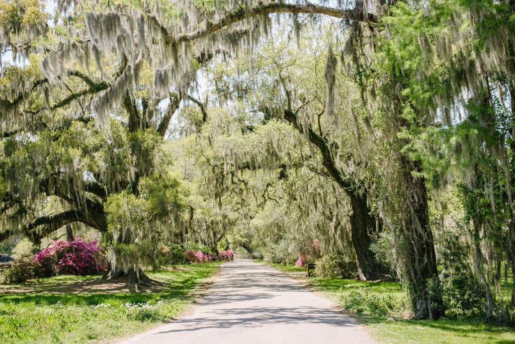 travel photography, iron and honey photography, north carolina, south carolina, magnolia plantation, melissa ferrara, iron and honey photography, landscape photography