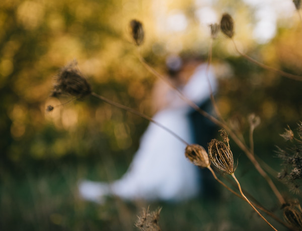 chicago wedding photographer, farm wedding, country wedding, north judson indiana, indiana wedding photographer, iron and honey